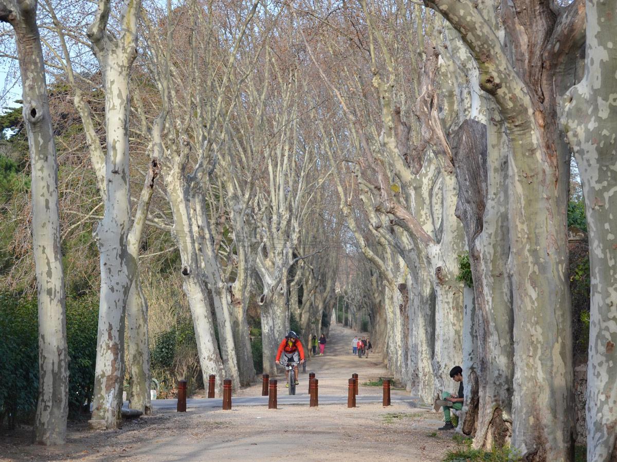 Millora i Recuperació del Passeig de la Boca de la Mina